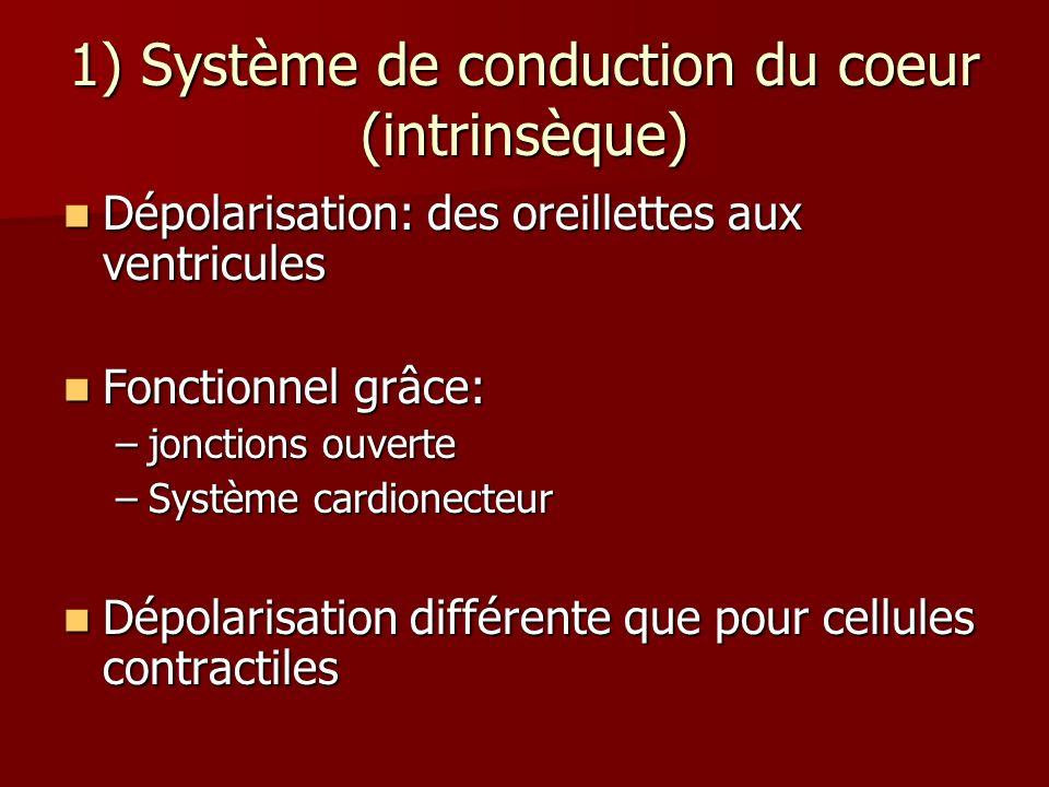 1) Système de conduction du coeur (intrinsèque)