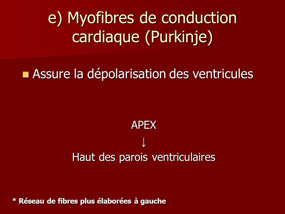 e) Myofibres de conduction cardiaque (Purkinje)