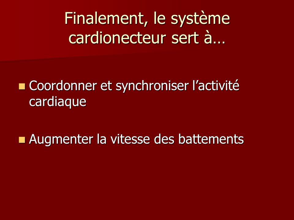 Finalement, le système cardionecteur sert à…