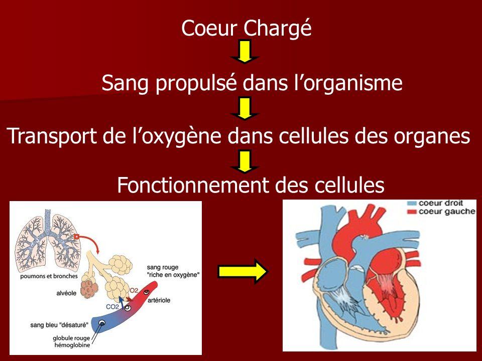 Coeur Chargé Sang propulsé dans l'organisme. Transport de l'oxygène dans cellules des organes.