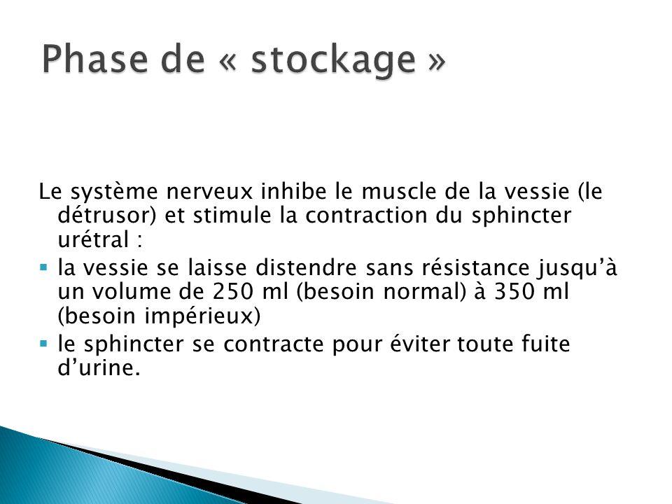 Phase de « stockage » Le système nerveux inhibe le muscle de la vessie (le détrusor) et stimule la contraction du sphincter urétral :