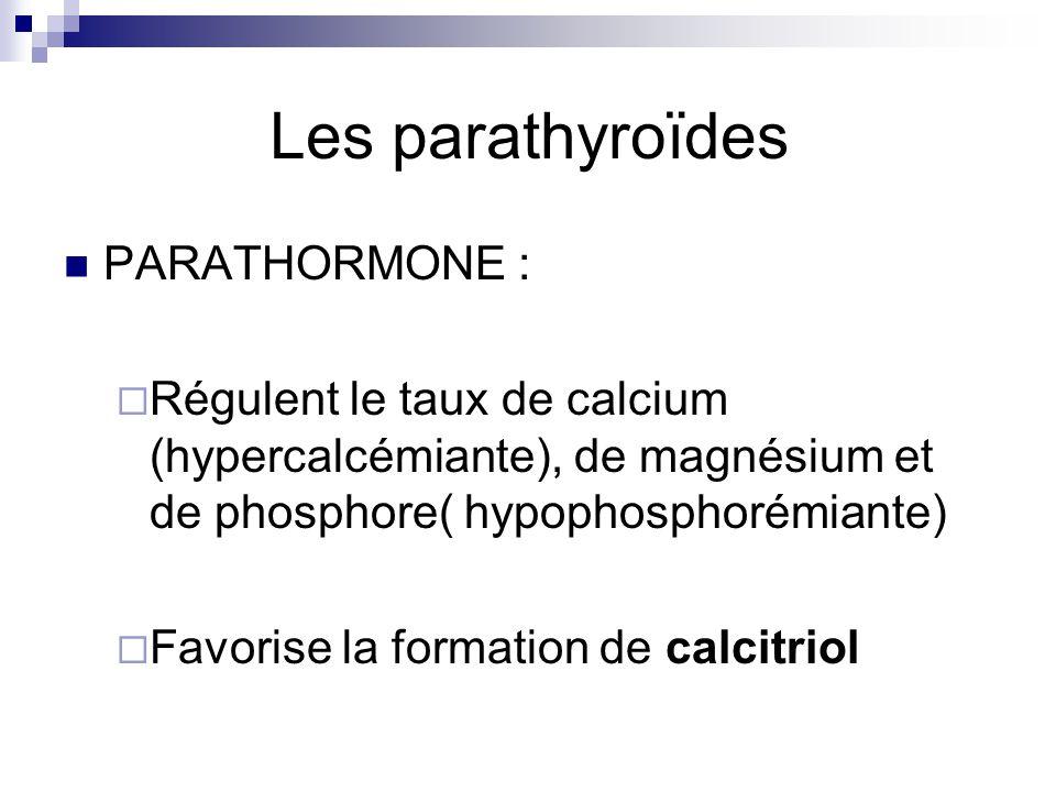 Les parathyroïdes PARATHORMONE :