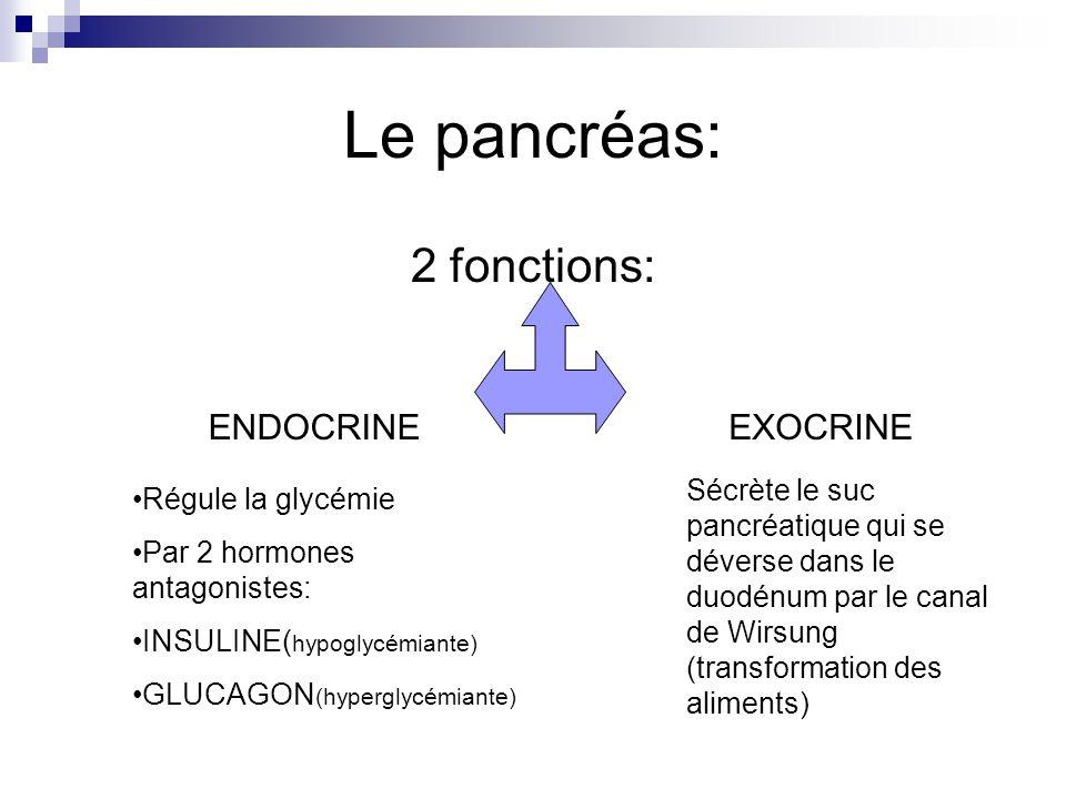 Le pancréas: 2 fonctions: ENDOCRINE EXOCRINE