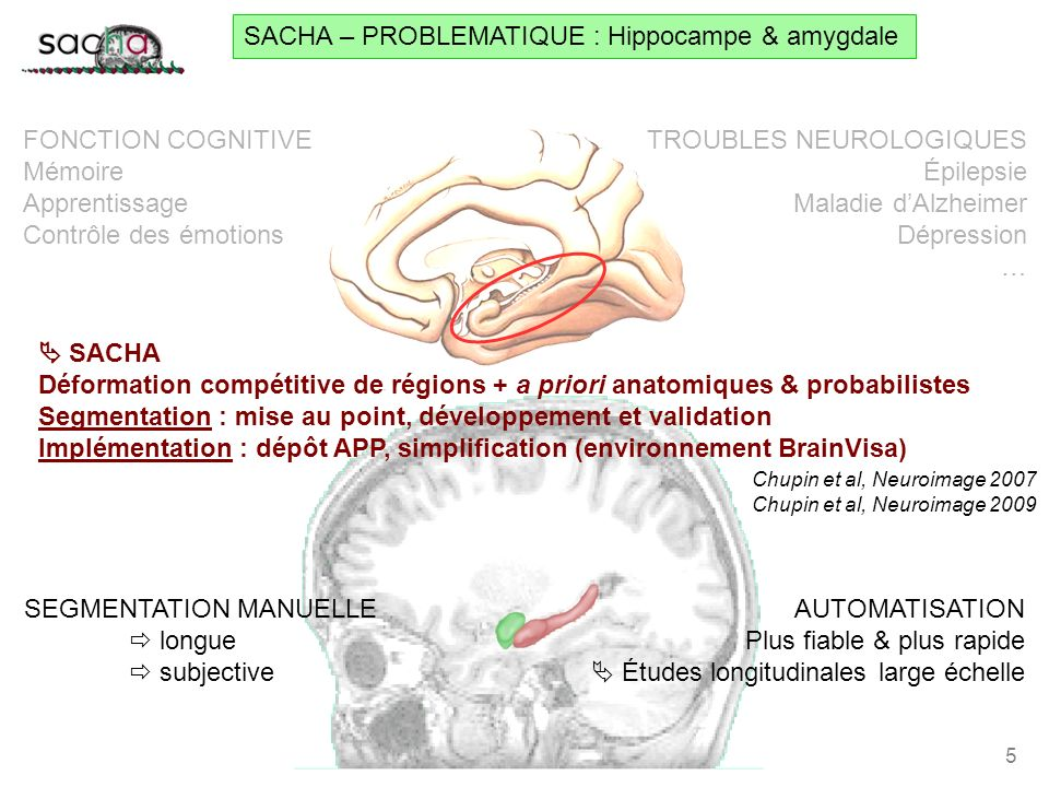 SACHA – PROBLEMATIQUE : Hippocampe & amygdale
