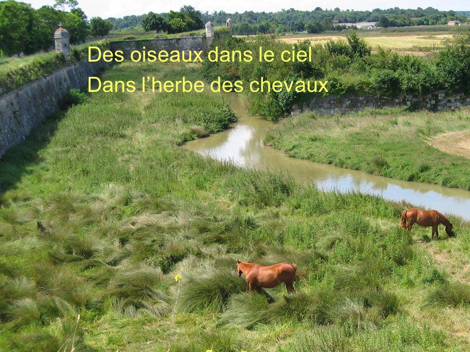Des oiseaux dans le ciel Dans l'herbe des chevaux