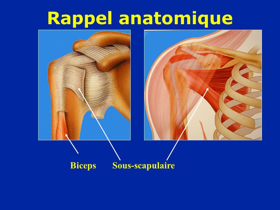 Rappel anatomique Biceps Sous-scapulaire