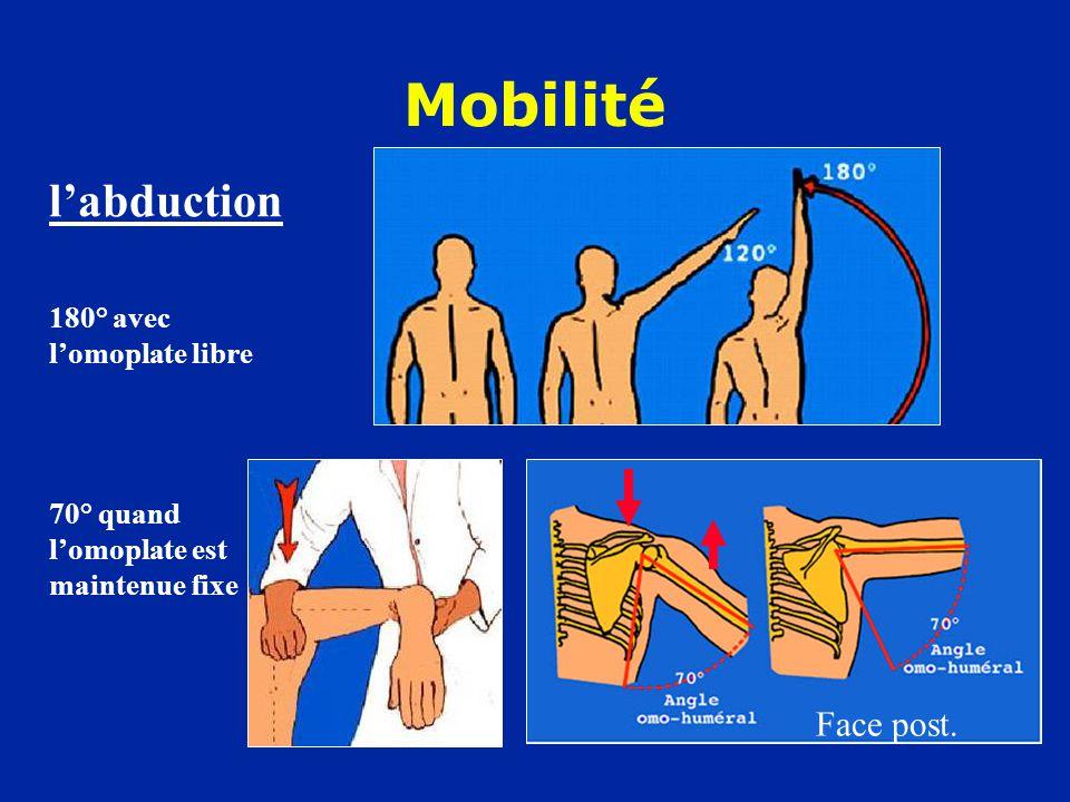 Mobilité l'abduction Face post. 180° avec l'omoplate libre