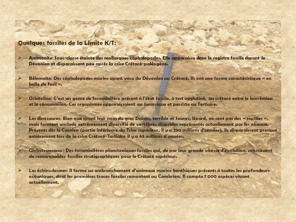 Quelques fossiles de la Limite K/T: