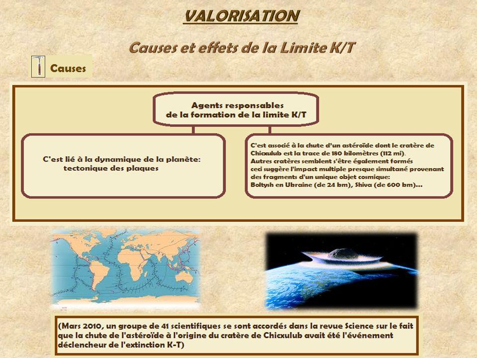 VALORISATION Causes et effets de la Limite K/T