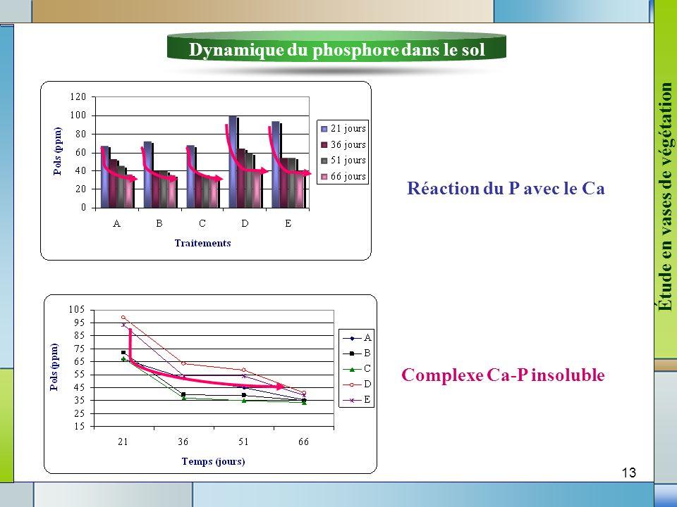 Dynamique du phosphore dans le sol