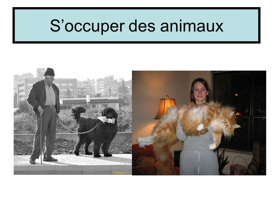 S'occuper des animaux
