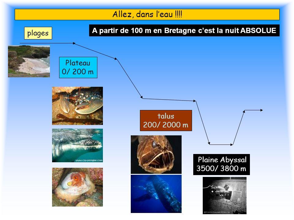 Allez, dans l'eau !!!! A partir de 100 m en Bretagne c'est la nuit ABSOLUE. plages. Plateau. 0/ 200 m.