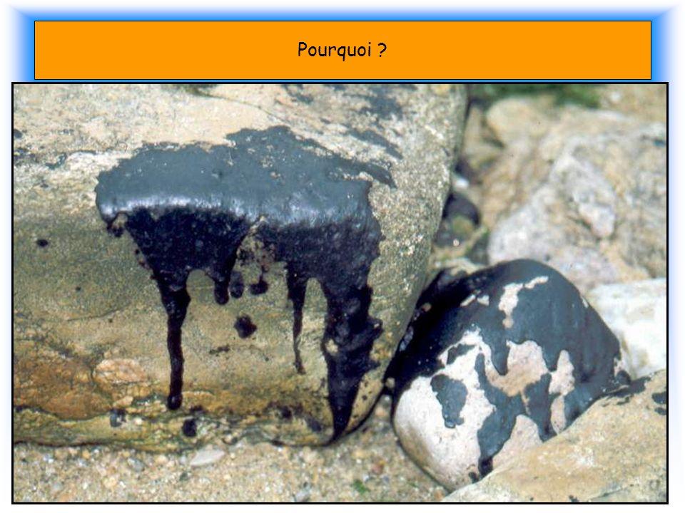 Pourquoi Les Marées noires. En 10 ans dans le monde 77 pétroliers ont coulés. 90 % de la pollution est due au Dégazage.
