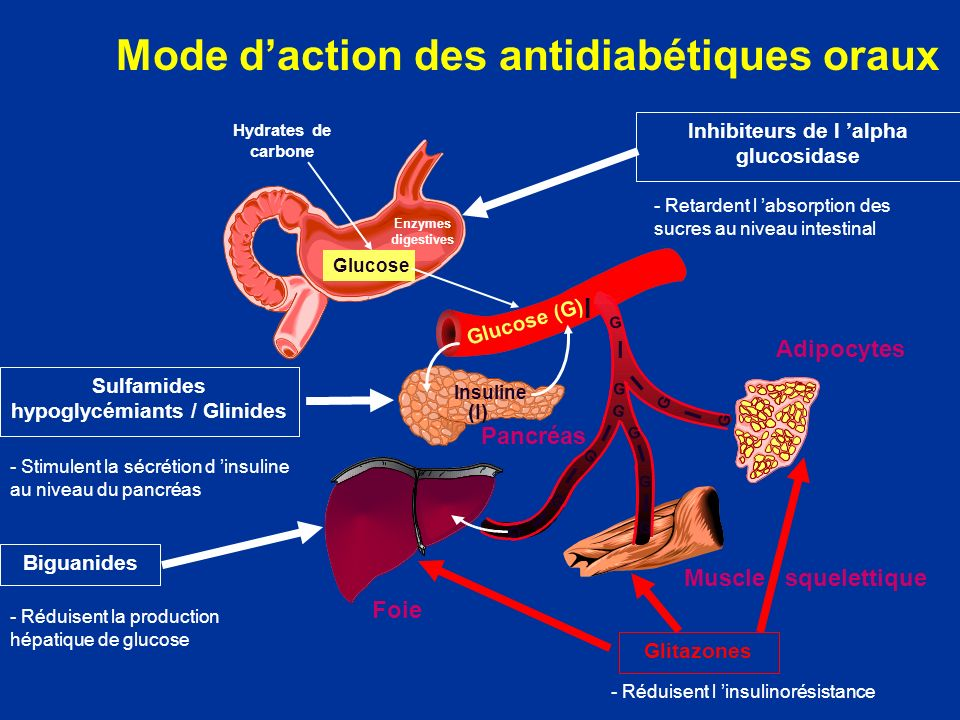Mode d'action des antidiabétiques oraux