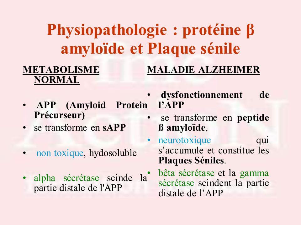 Physiopathologie : protéine β amyloïde et Plaque sénile