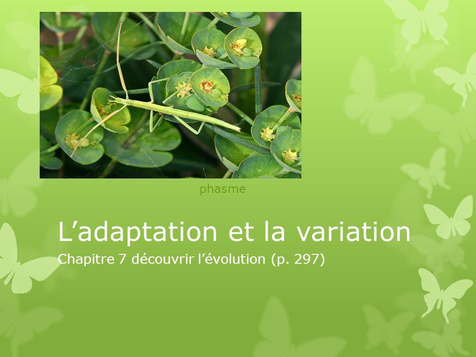 L'adaptation et la variation