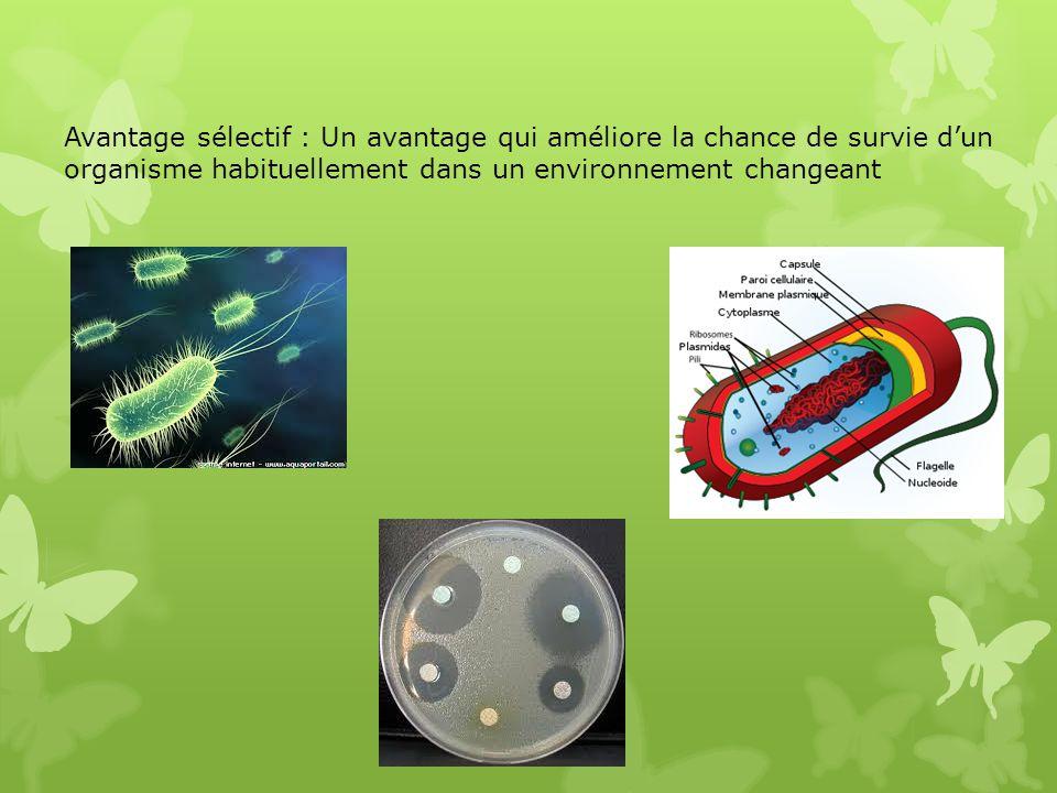Avantage sélectif : Un avantage qui améliore la chance de survie d'un organisme habituellement dans un environnement changeant