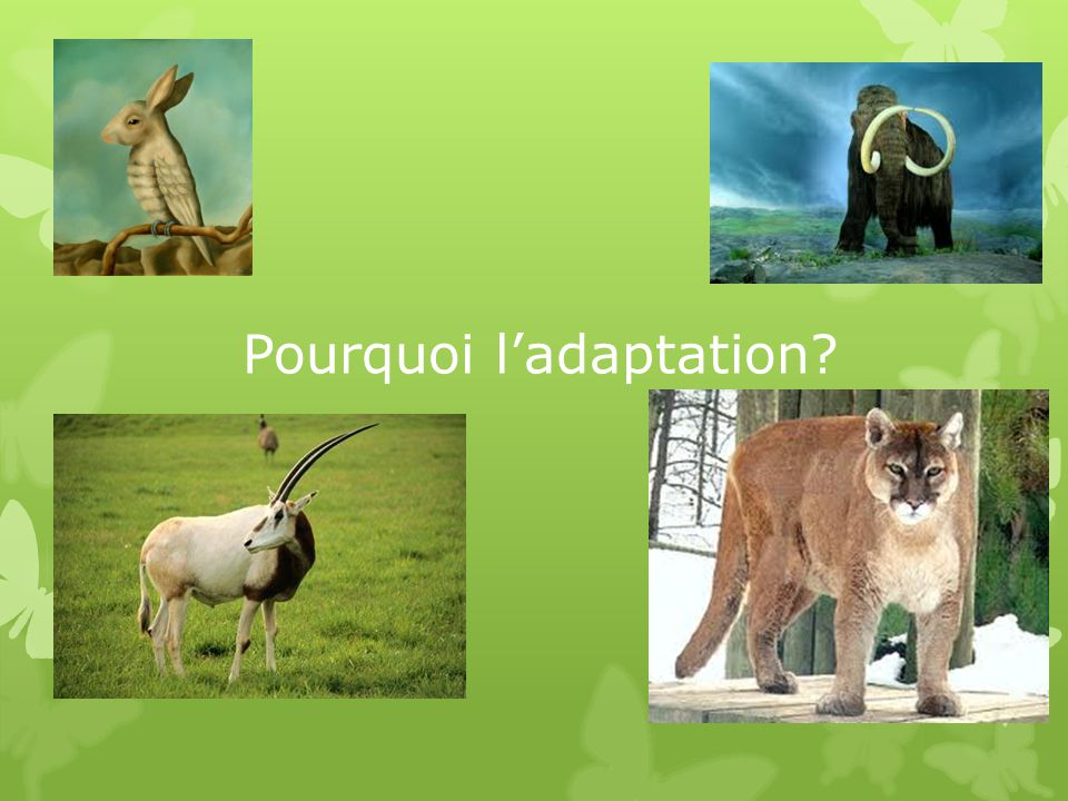 Pourquoi l'adaptation
