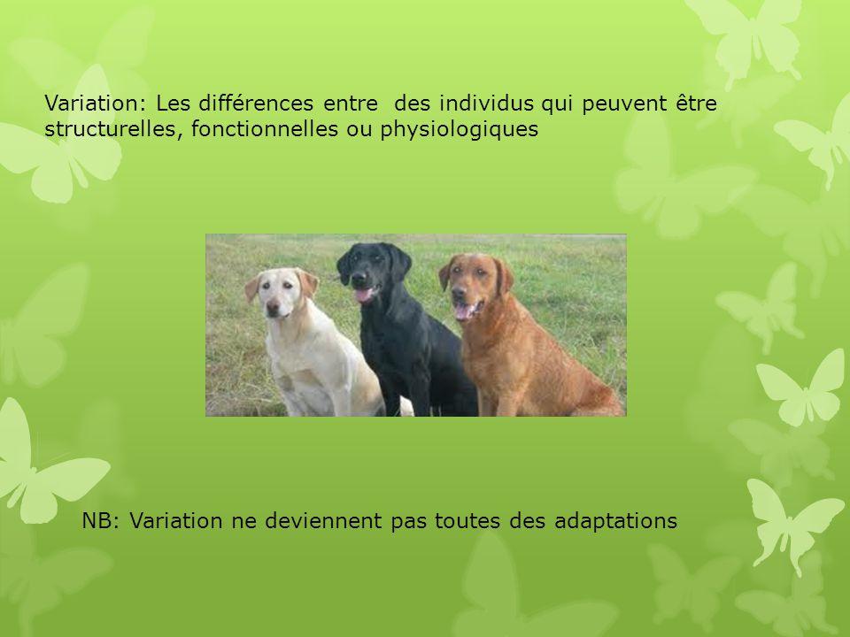 Variation: Les différences entre des individus qui peuvent être structurelles, fonctionnelles ou physiologiques