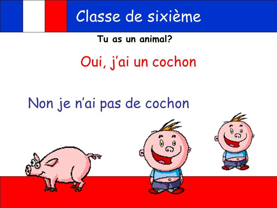 Classe de sixième Oui, j'ai un cochon Non je n'ai pas de cochon