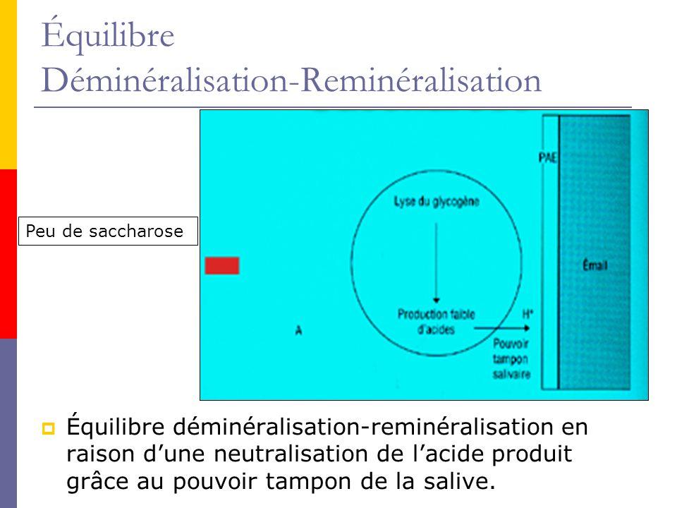Équilibre Déminéralisation-Reminéralisation