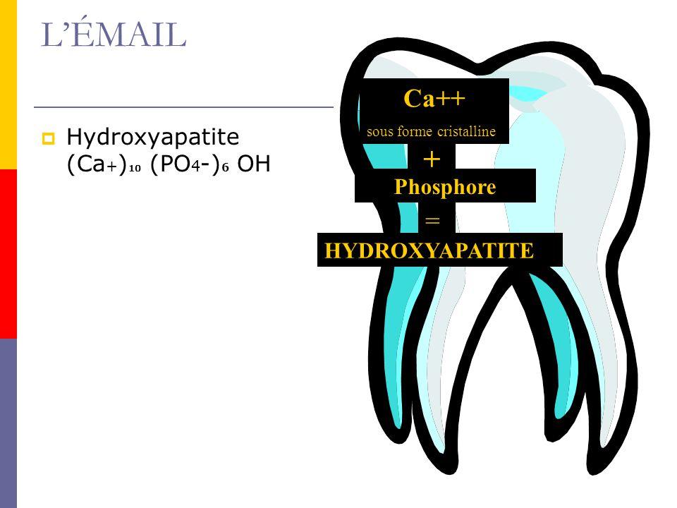L'ÉMAIL + Ca++ = Hydroxyapatite (Ca+)10 (PO4-)6 OH Phosphore