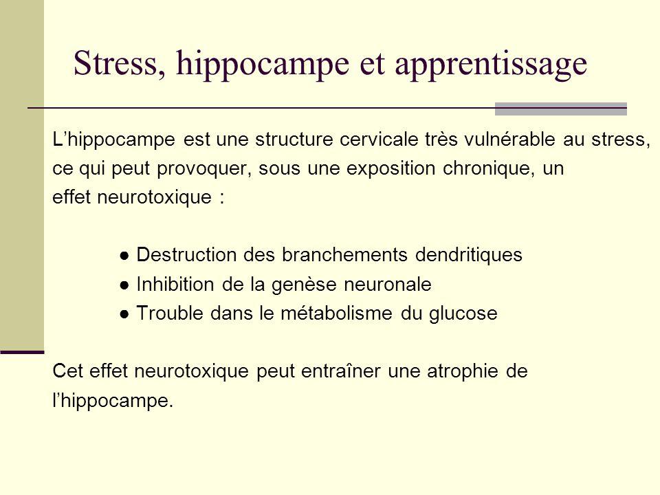 Stress, hippocampe et apprentissage
