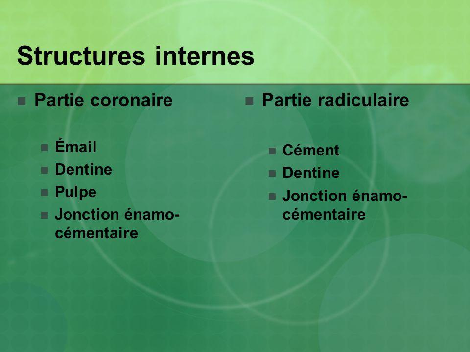Structures internes Partie coronaire Partie radiculaire Émail Cément