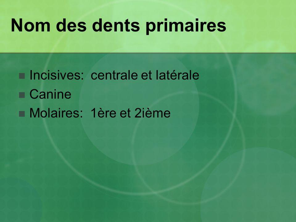 Nom des dents primaires