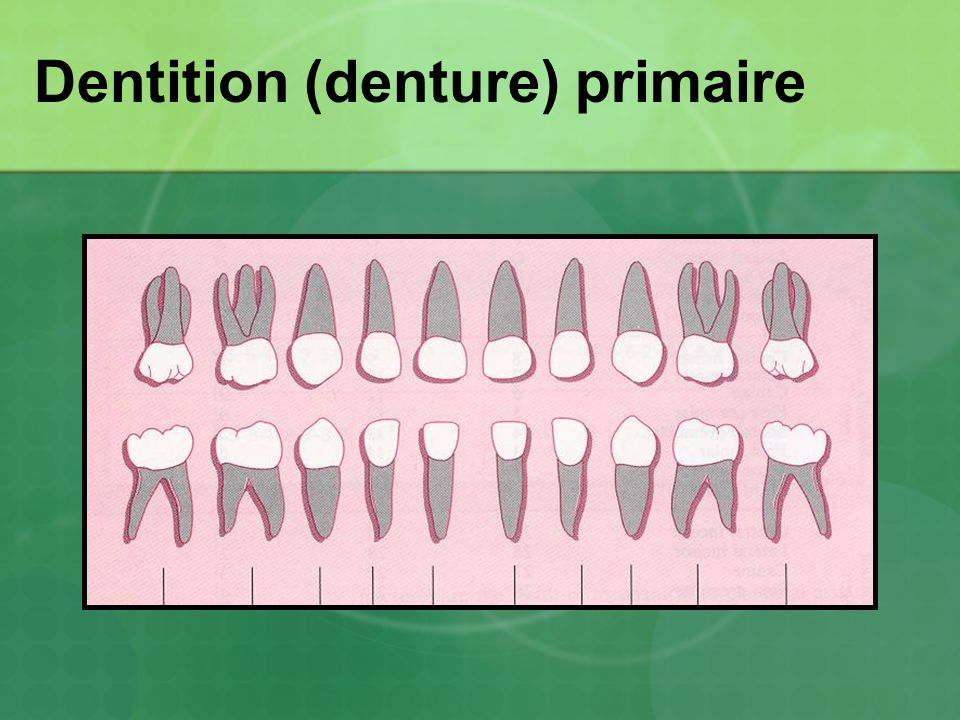 Dentition (denture) primaire