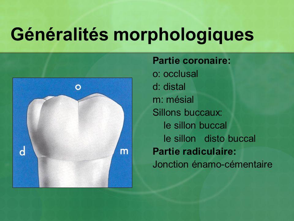 Généralités morphologiques