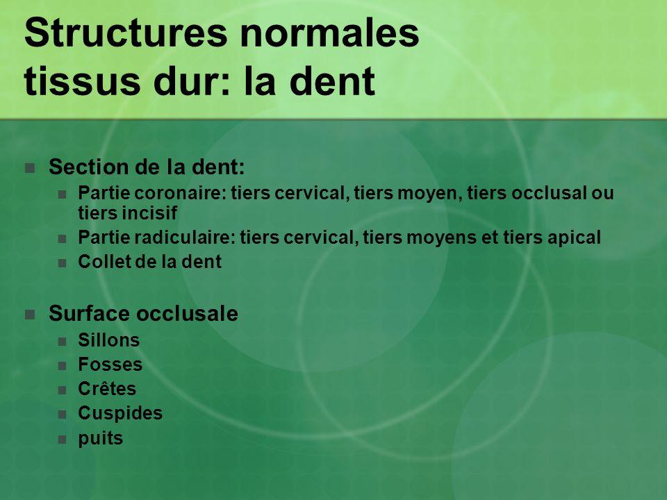 Structures normales tissus dur: la dent
