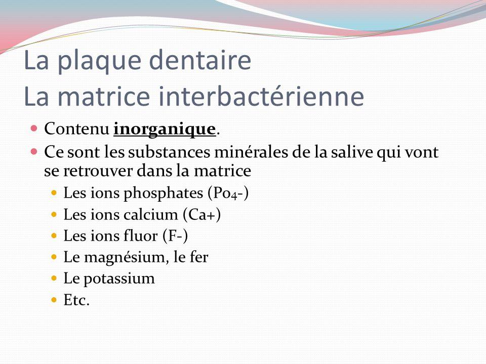 La plaque dentaire La matrice interbactérienne