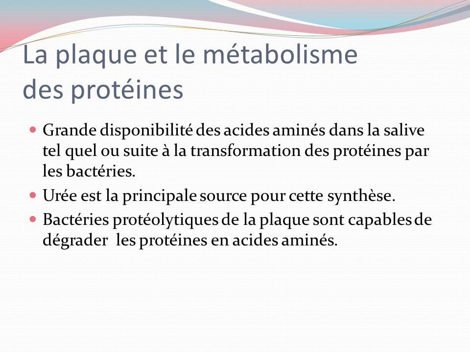 La plaque et le métabolisme des protéines