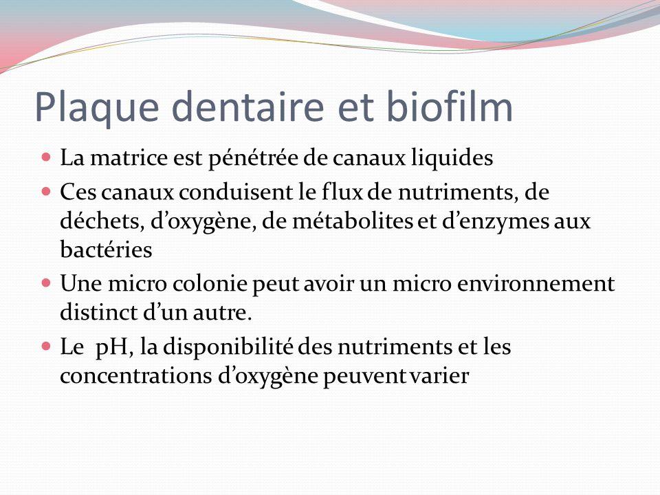 Plaque dentaire et biofilm