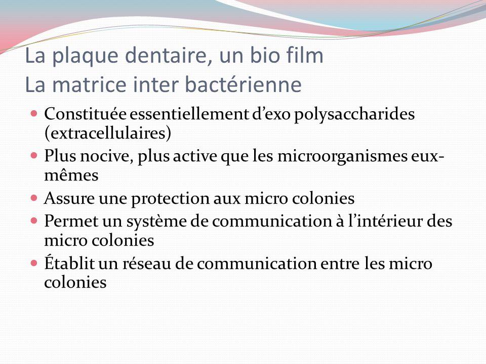 La plaque dentaire, un bio film La matrice inter bactérienne