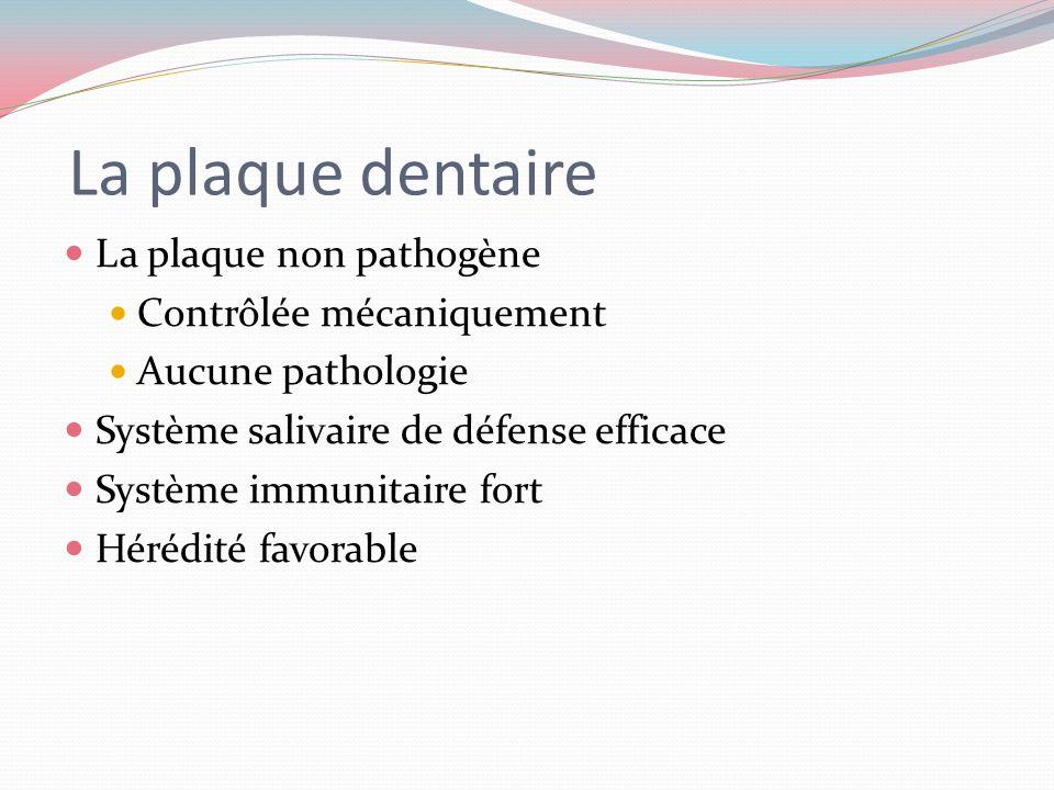 La plaque dentaire La plaque non pathogène Contrôlée mécaniquement