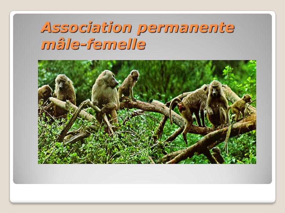 Association permanente mâle-femelle
