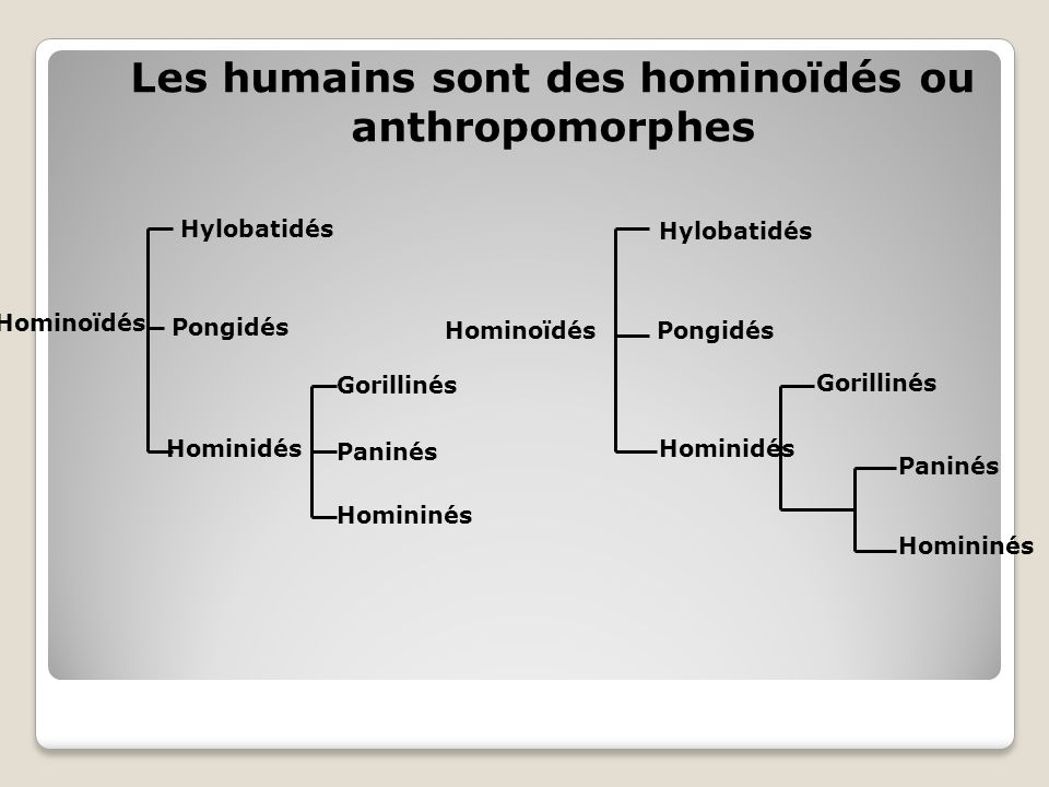 Les humains sont des hominoïdés ou anthropomorphes