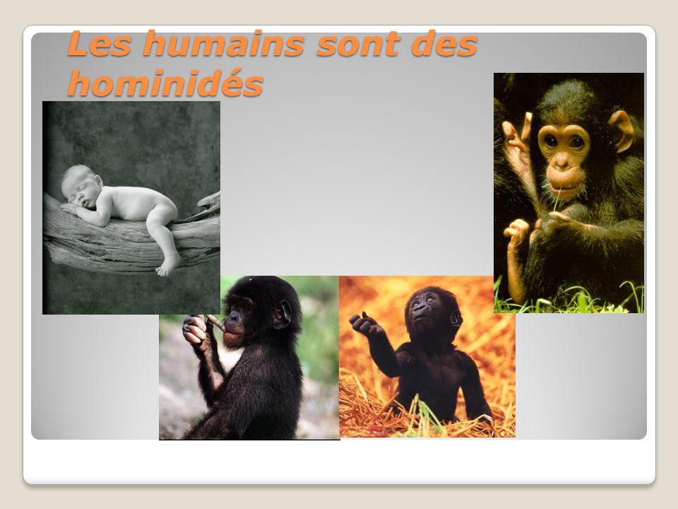 Les humains sont des hominidés