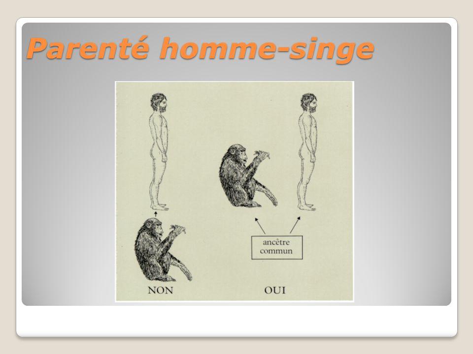 Parenté homme-singe