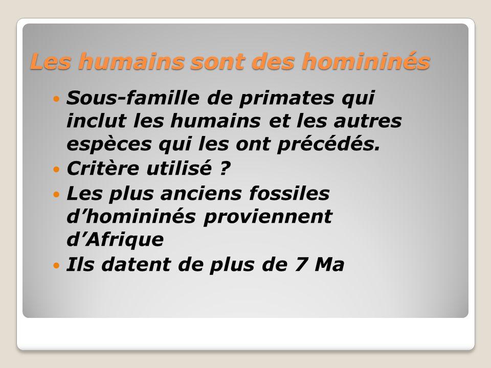 Les humains sont des homininés