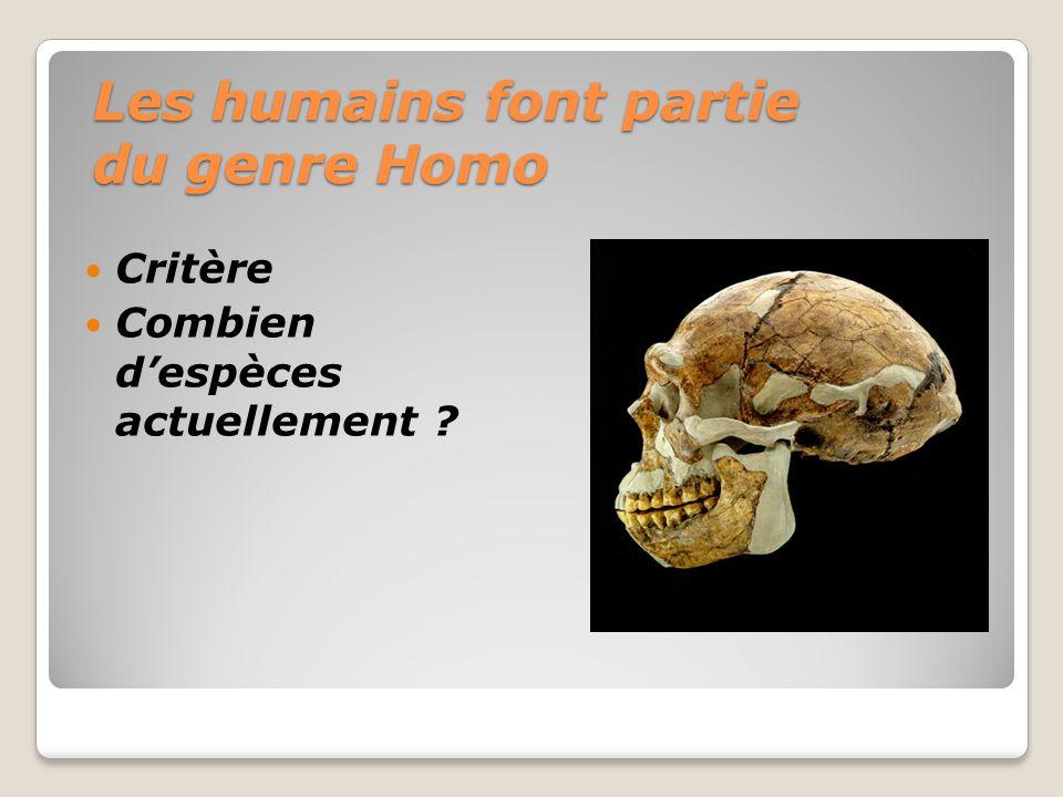 Les humains font partie du genre Homo