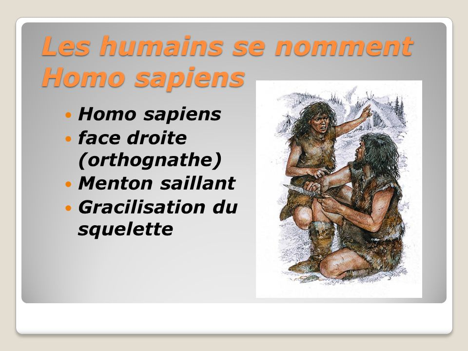 Les humains se nomment Homo sapiens