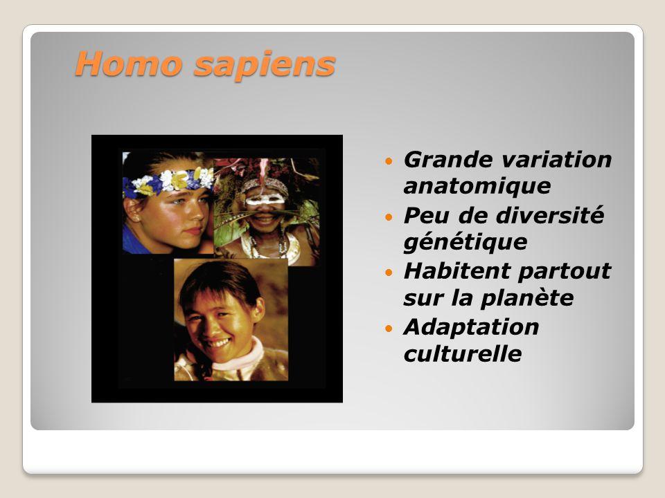 Homo sapiens Grande variation anatomique Peu de diversité génétique