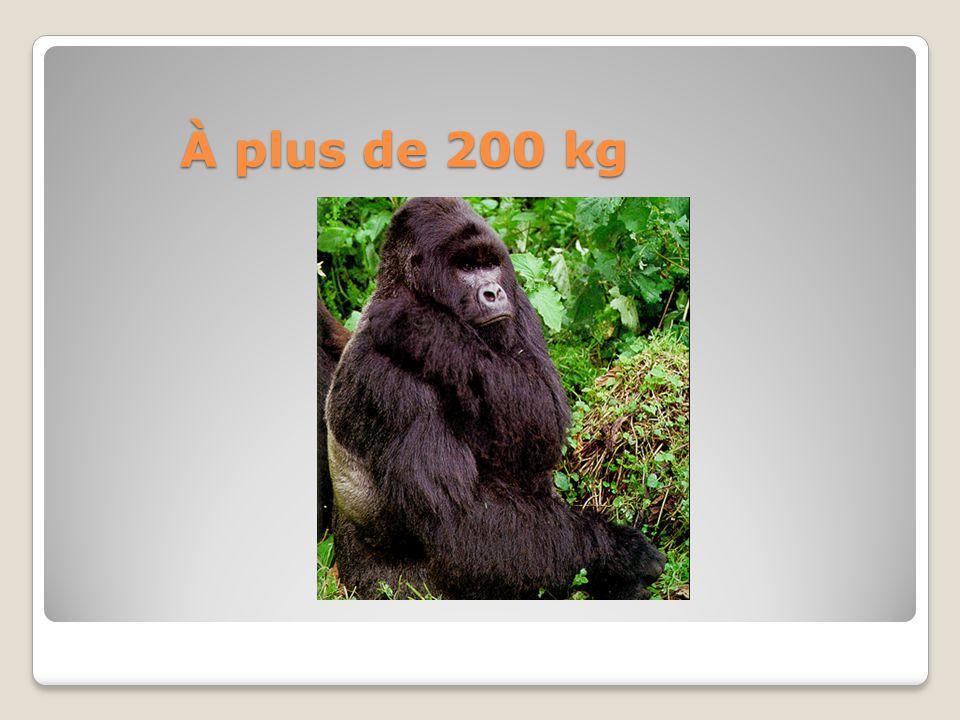 À plus de 200 kg