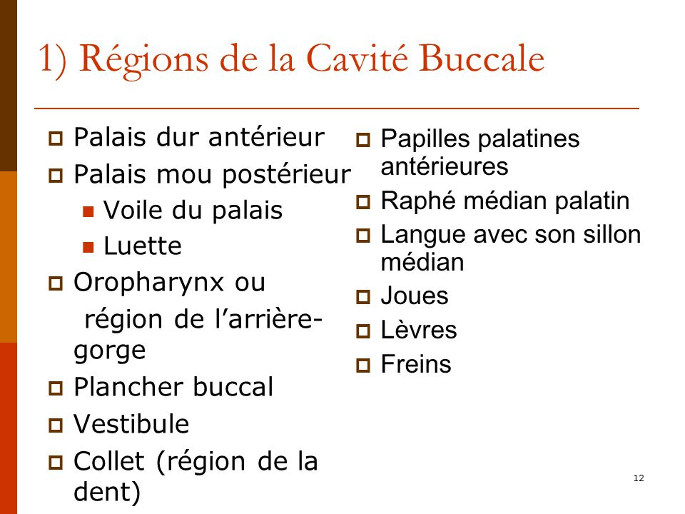 1) Régions de la Cavité Buccale