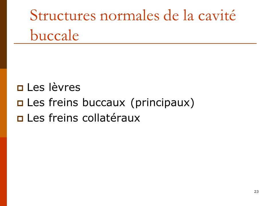 Structures normales de la cavité buccale