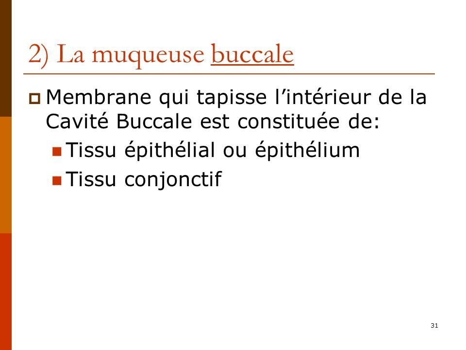 2) La muqueuse buccale Membrane qui tapisse l'intérieur de la Cavité Buccale est constituée de: Tissu épithélial ou épithélium.