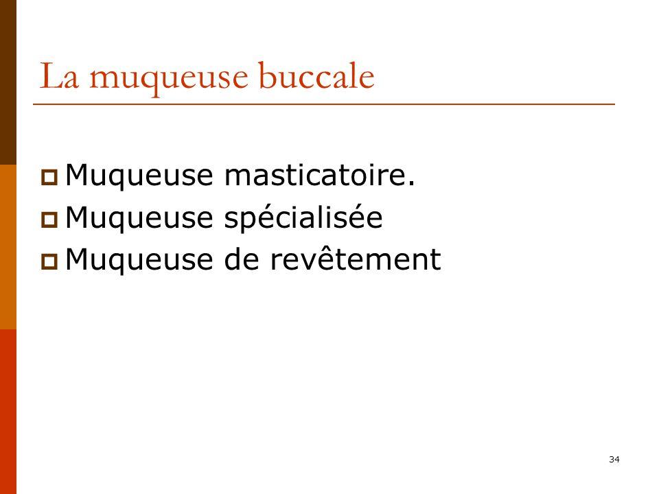 La muqueuse buccale Muqueuse masticatoire. Muqueuse spécialisée